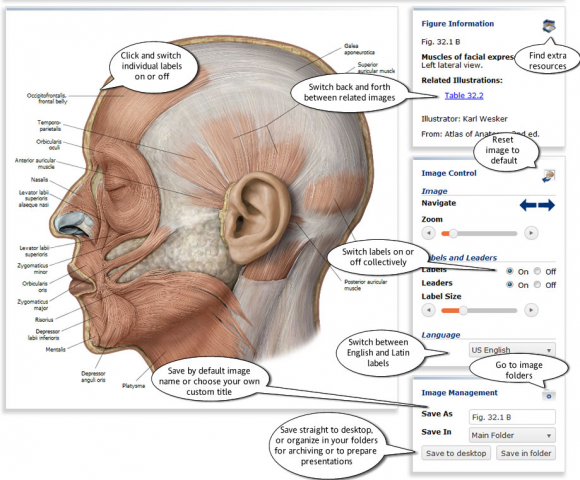 thieme_anatomy2